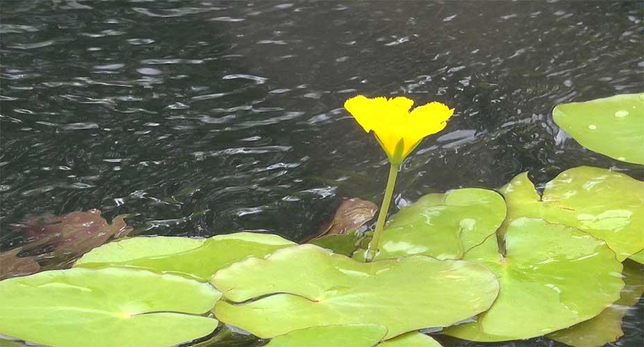 Schlossinsel Blume